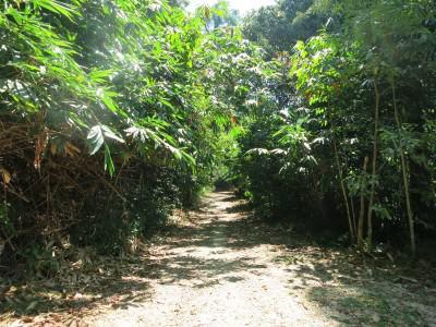 Dschungel in Thailand