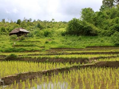 ein kleines Haus an einem Reisfeld nähe Chang Mai