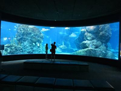 Haifischbecken des Siam Ocean World in Bangkok